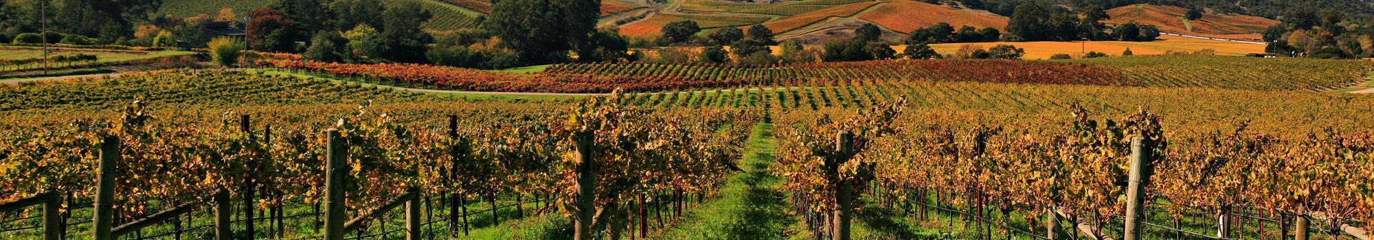 Vineyards_in_Napa_Valley_7