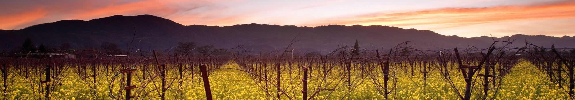 sunset-wild-mustard-napa-valley-vineyards-california-72172