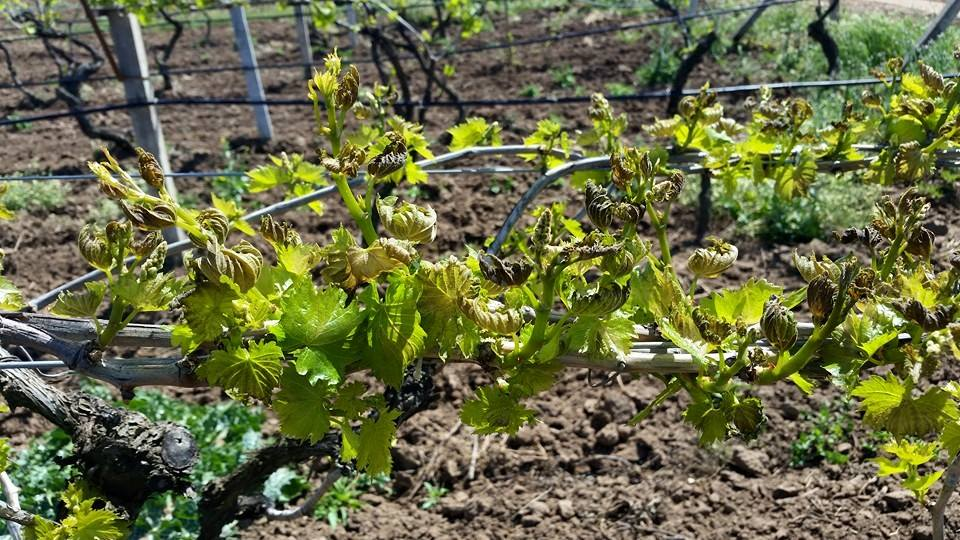 Vineyard Video Clip
