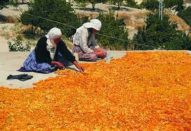 Dried Apricots Market Update...