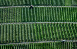 vineyards8