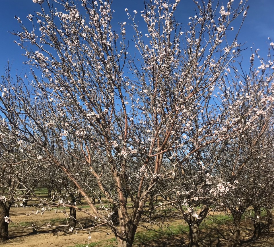 The California Subjective Crop Estimate for 2018 is estimated at  2.3 Billion Pounds.