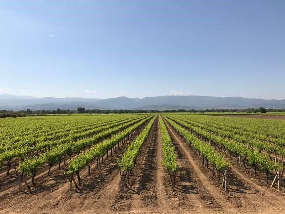 Development on new 2018 Turkish vine fruit crop