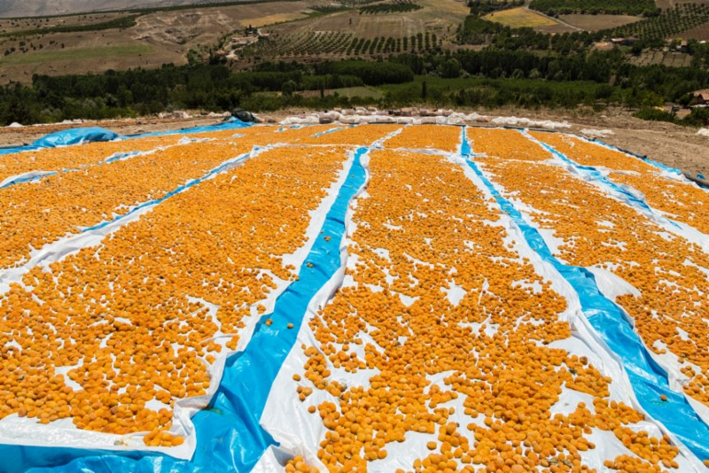 Turkish Apricot Update November 2018