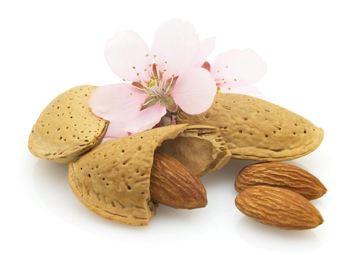 Almonds Report
