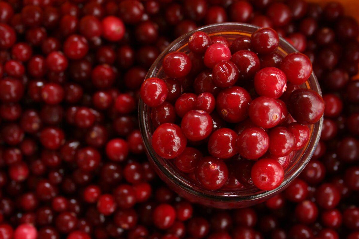 New Crop Cranberry Update