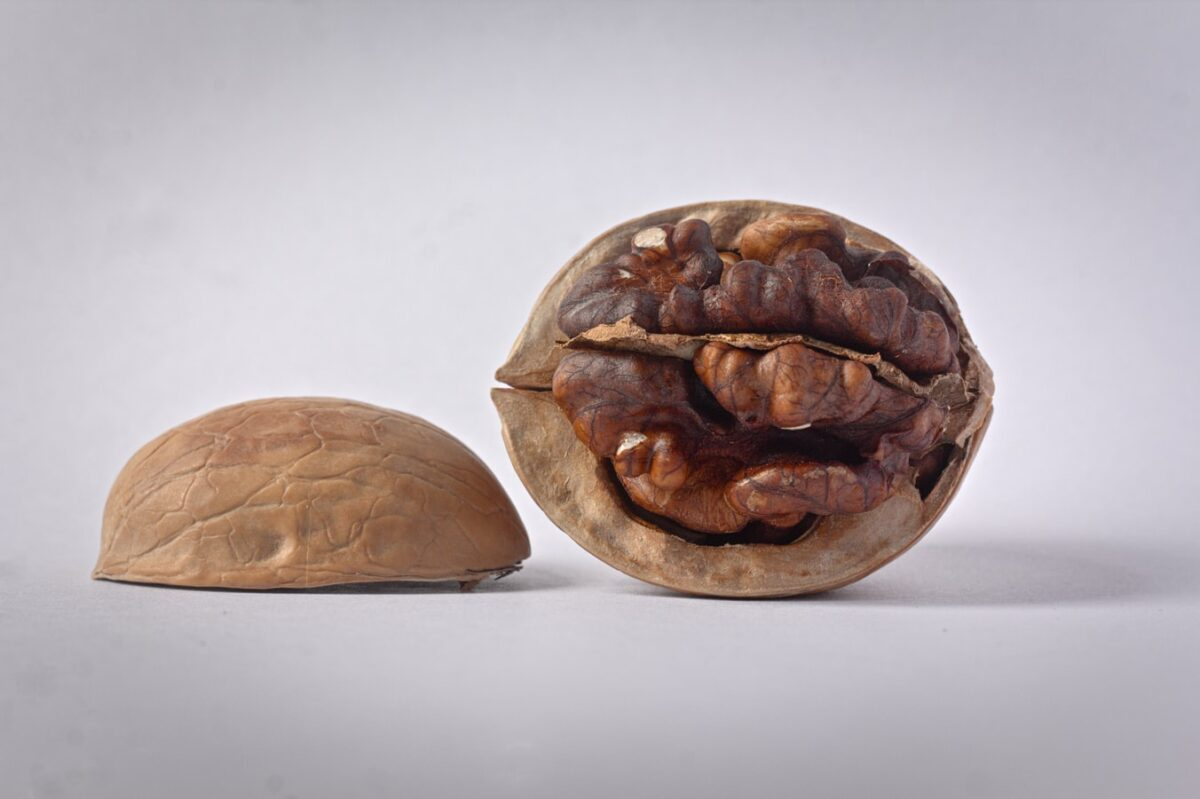 January Review - California Walnut Market Report & Crop Update