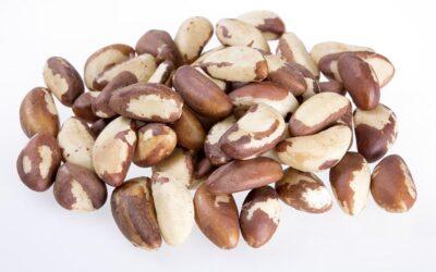 Brazil Nut Market Report July 21