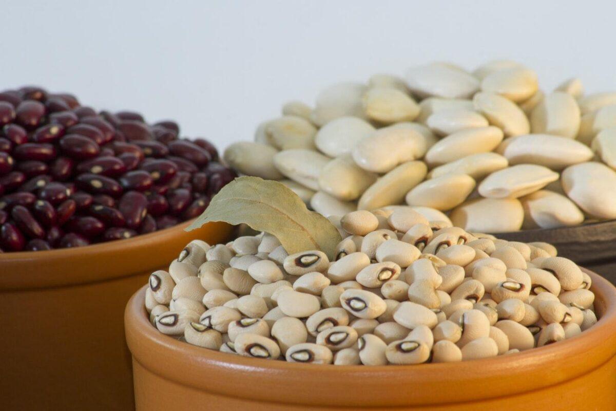 Bean Market Update!