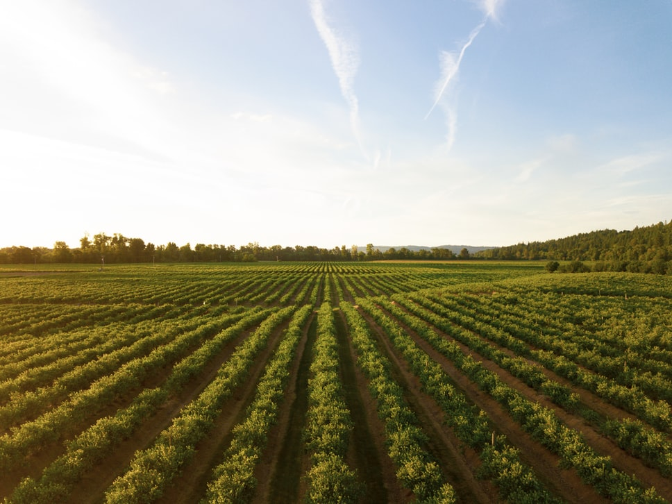 Turkish Vineyard Observations - May Summary
